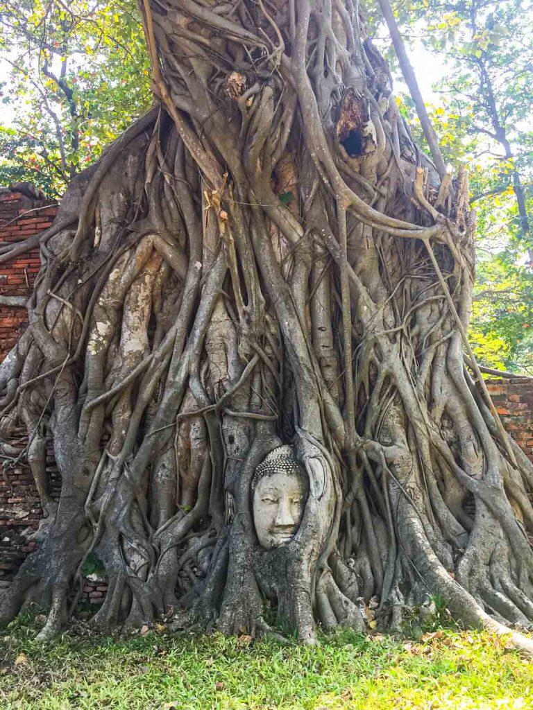 Buddha Head Statue Ayutthaya
