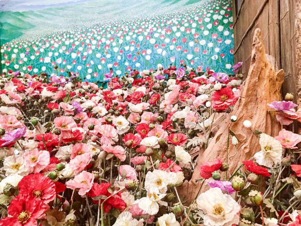 ladang bunga poppy di museum opium