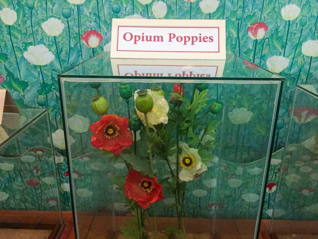 Oppium poppies